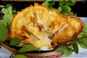 Mushroom from Carob Tree