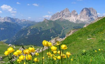 Yellow wildflowers in Dolomites