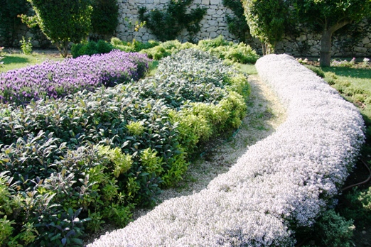 Blooming Herb Garden in Sicily