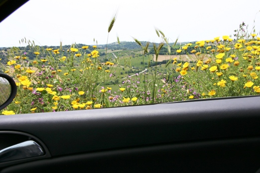 wildflowers through car window