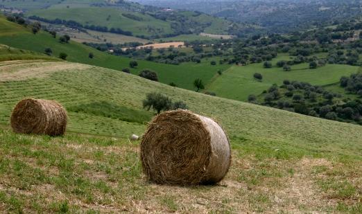 hay bales in Sicily