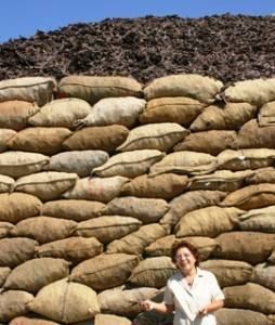 sacks of carob pods in Sicily