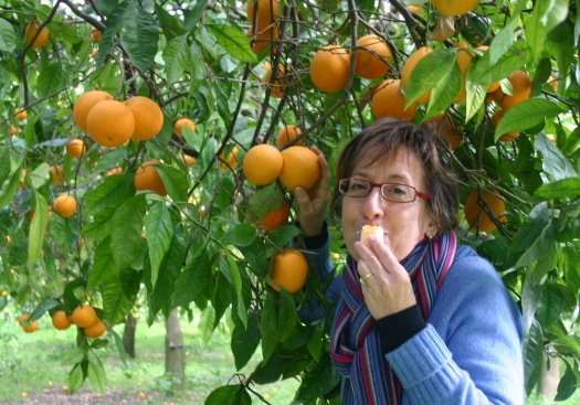 Picking oranges in Sicily on a walking tour