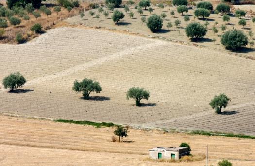 Fields in Sicily