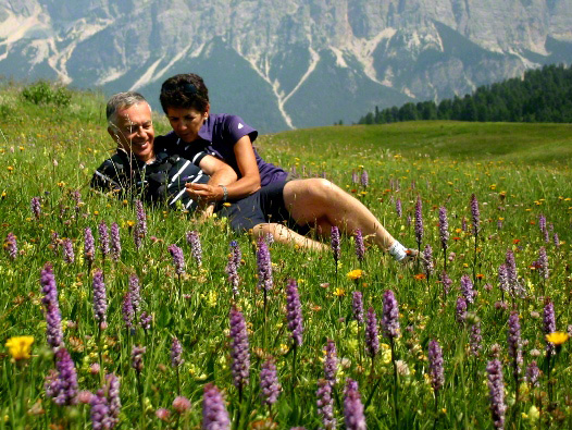 wildflowers in the dolomites