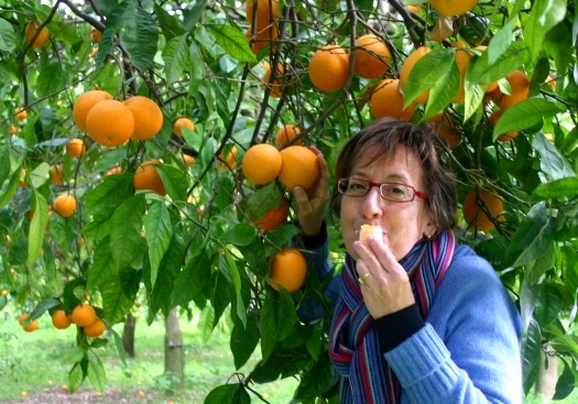 eating tarocco orange from tree in Sicily