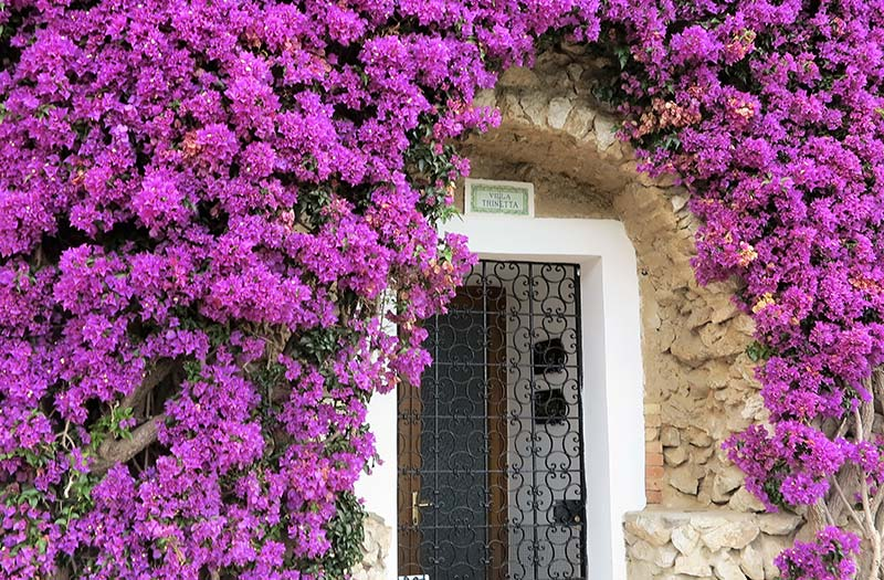 Door with purple flowers around it in Amalfi Coast