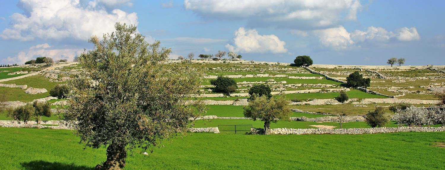 Sicilian countryside with dry-stone walls