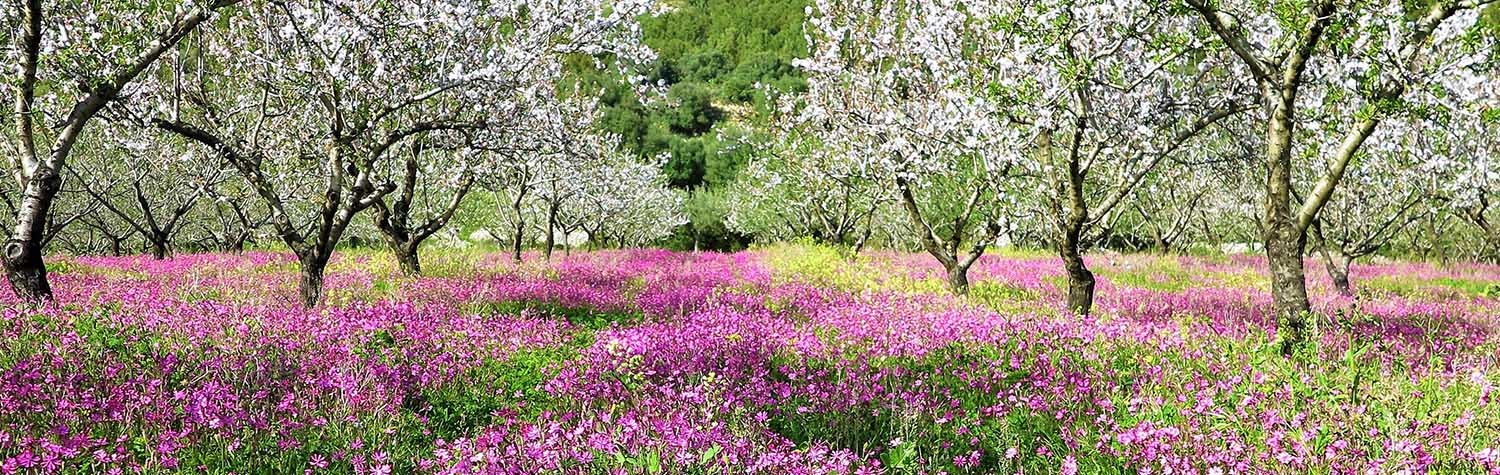 field with blossoming trees and pink flowers