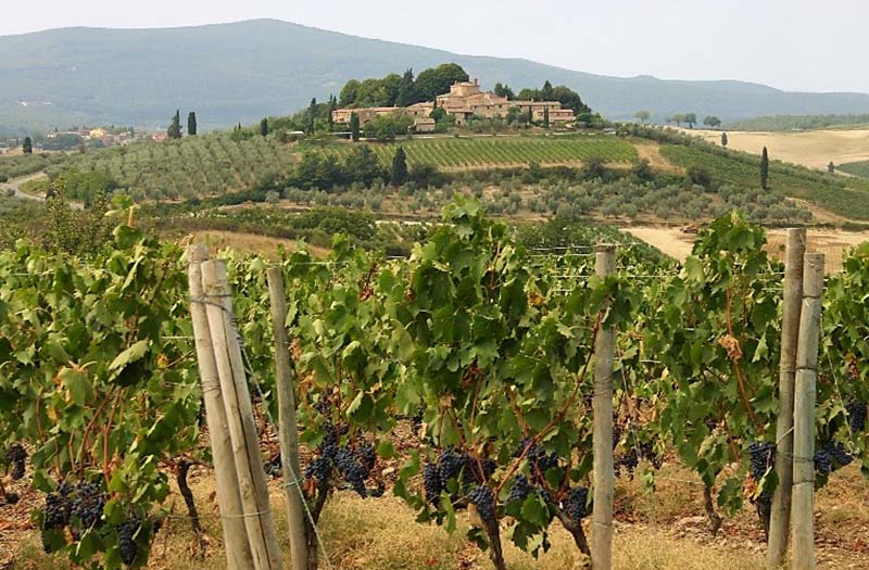 view of vineyard in Umbria