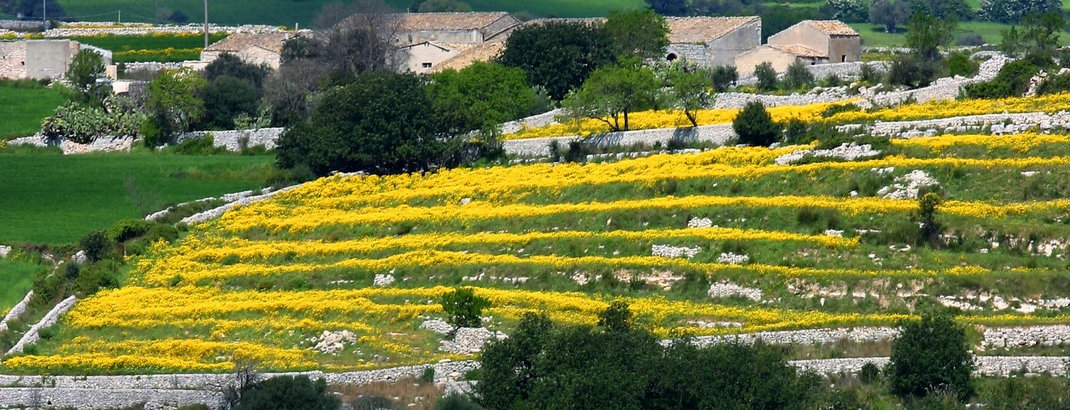 Farm in Sicily, terraces with yellow flowers